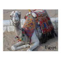 Egypt Camel Postcard