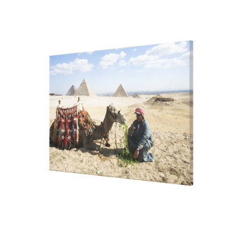 Egypt, Giza. Native man feeds his camel in Canvas Print