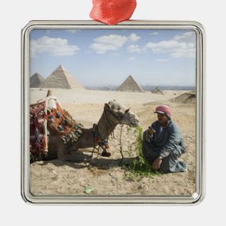 Egypt, Giza. Native man feeds his camel in Metal Ornament