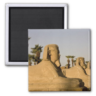 Egypt, Luxor. The Avenue of Sphinxes leads to 2 Inch Square Magnet