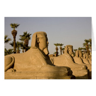 Egypt, Luxor. The Avenue of Sphinxes leads to Card