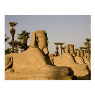 Egypt, Luxor. The Avenue of Sphinxes leads to Postcard