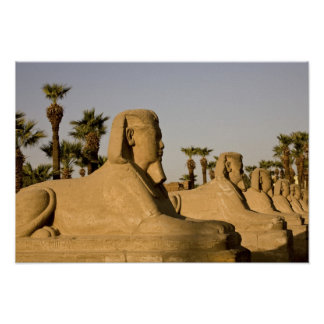 Egypt, Luxor. The Avenue of Sphinxes leads to Poster