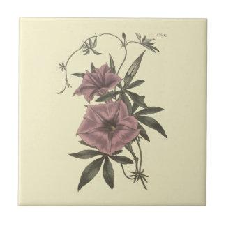 Egyptian Bindweed Botanical Illustration Tile