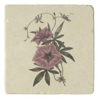 Egyptian Bindweed Botanical Illustration Trivet