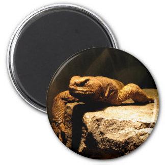 Egyptian Dab Lizard Magnet