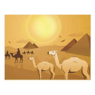 Egyptian desert camels postcard