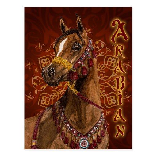 Egyptian Dream Arabian horse postcard