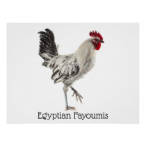 Egyptian Fayoumis Rooster Poster
