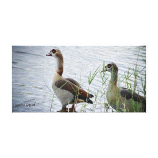 Egyptian Geese Oil Print
