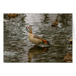 Egyptian Goose Greeting Cards