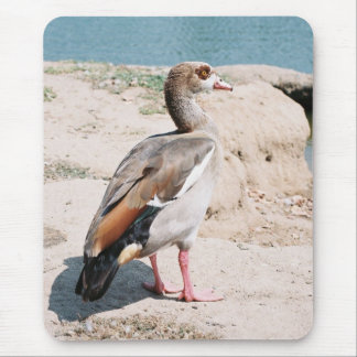 Egyptian Goose Mouse Pad