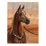Egyptian Princess Arabian horse postcard
