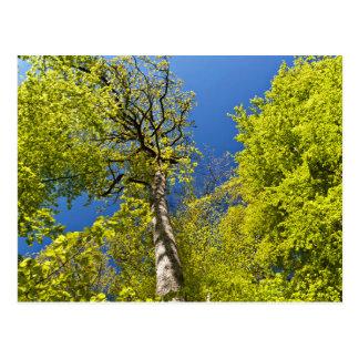 Eifel'S Beach Trees Postcard