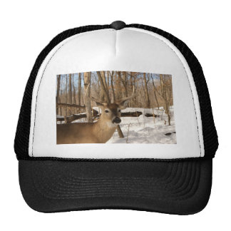 Eight point buck in winter snow. hats