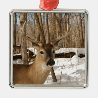 Eight point buck in winter snow. ornaments