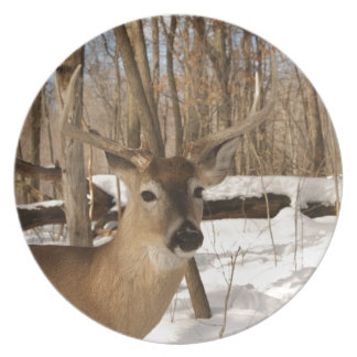 Eight point buck in winter snow. plate