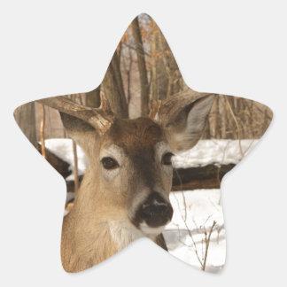 Eight point buck in winter snow. sticker