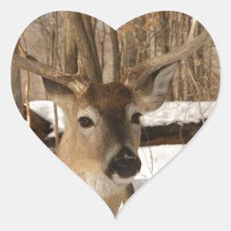 Eight point buck in winter snow. heart stickers