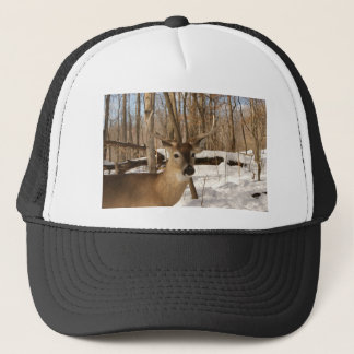 Eight point buck in winter snow. trucker hat