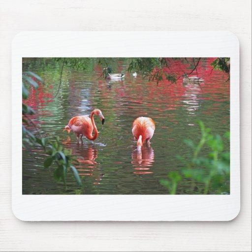 Ein Stück vom Paradies Flamingos Mouse Pads