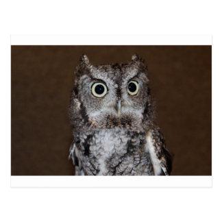 Einstein- Eastern Screech Owl I Postcard