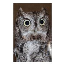Einstein- Eastern Screech Owl I Stationery