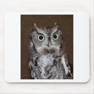 Einstein- Eastern Screech Owl II Mouse Pad