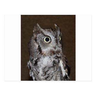 Einstein- Eastern Screech Owl III Postcard
