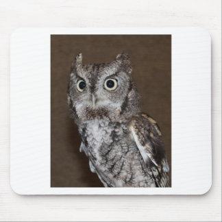 Einstein- Eastern Screech Owl IV Mouse Pad