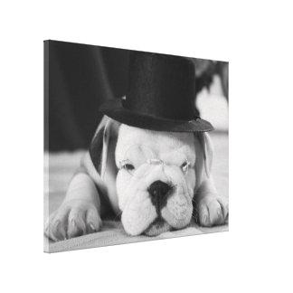 """""""Einstein"""" English Bulldog Puppy Stretched Canvas Prints"""