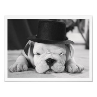 """Einstein"" English Bulldog Puppy Photo Print"