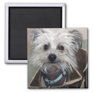 Einstein the Dog Magnet