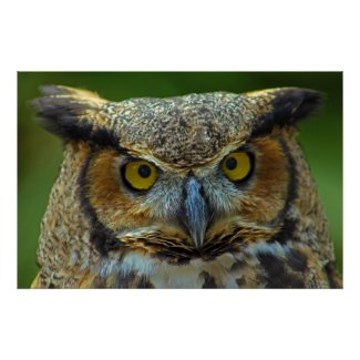 Einstein, the Great Horned Owl Poster