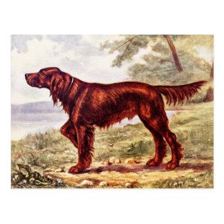 Ejemplo 1900 de Irish Setter del perro que se divi Tarjeta Postal
