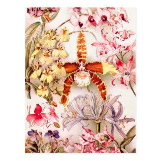 Ejemplo 1911 de la flor rosada de la orquídea del postales