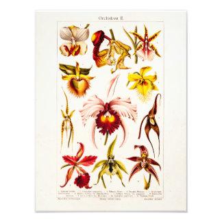 Ejemplo 1911 de la variedad de la flor de la orquí arte fotografico