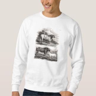 Ejemplo agrícola de las ovejas de la vaca de los suéter