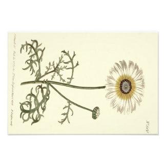 Ejemplo amarillo tricolor del crisantemo cojinete