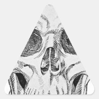 Ejemplo anatómico del cráneo humano (visión pegatina triangular