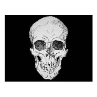 Ejemplo anatómico del cráneo humano (visión tarjetas postales