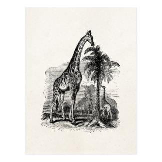 Ejemplo animal personalizado jirafa del vintage tarjetas postales