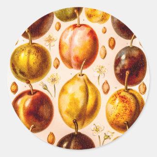 Ejemplo antiguo de la fruta del ciruelo de los pegatina redonda