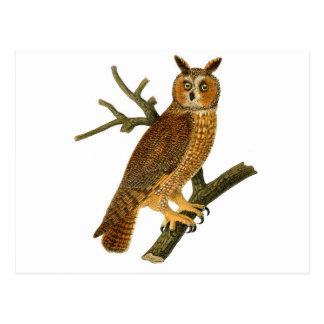 Ejemplo antiguo del búho de la historia natural postales