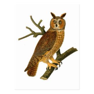 Ejemplo antiguo del búho de la historia natural tarjetas postales