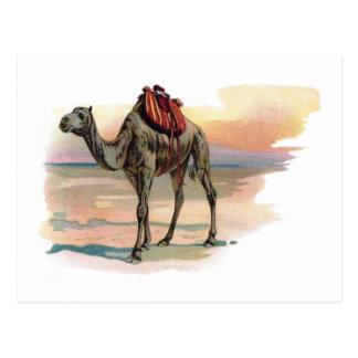 Ejemplo antiguo del camello del dromedario postales