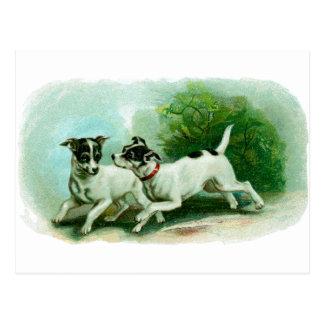 Ejemplo antiguo del fox terrier tarjeta postal