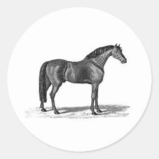 Ejemplo árabe del caballo de los 1800s del vintage etiqueta redonda