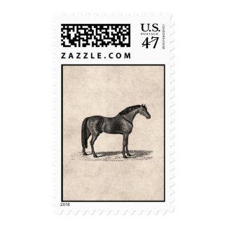 Ejemplo árabe del caballo de los 1800s del vintage sellos