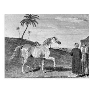 Ejemplo árabe del vintage del caballo postal